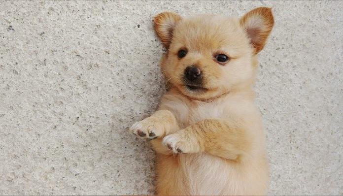 0 7 - 생후 두 달된 아기 강아지를 잔인하게 던져죽인 노인... '경악'