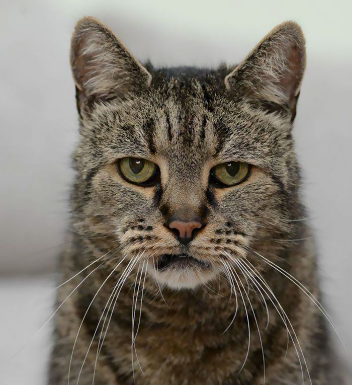 31 year old cat nutmeg 7 1 - 생일 맞은 31살 고양이... '못마땅한 표정'을 짓는 이유는?