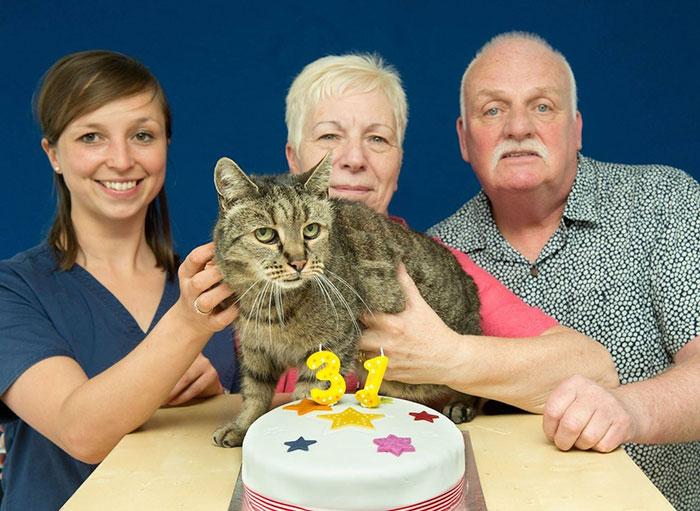 31 year old cat nutmeg 8 - 생일 맞은 31살 고양이... '못마땅한 표정'을 짓는 이유는?