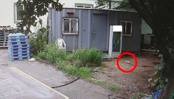 5 17 - 생후 두 달된 아기 강아지를 잔인하게 던져죽인 노인... '경악'