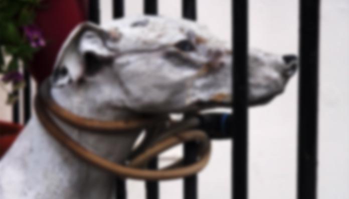 6 9 - 생후 두 달된 아기 강아지를 잔인하게 던져죽인 노인... '경악'