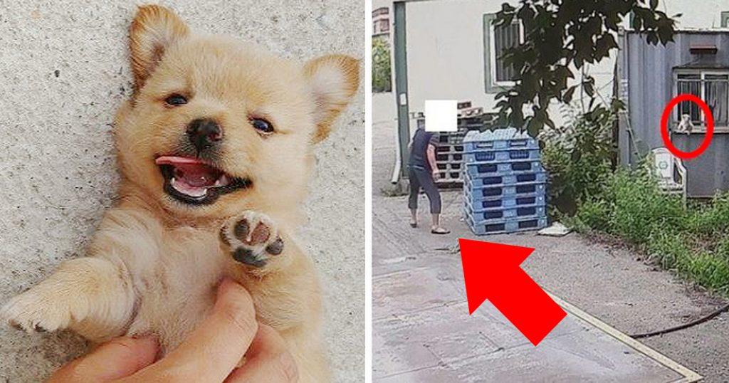 7 7 1024x538 - 생후 두 달된 아기 강아지를 잔인하게 던져죽인 노인... '경악'