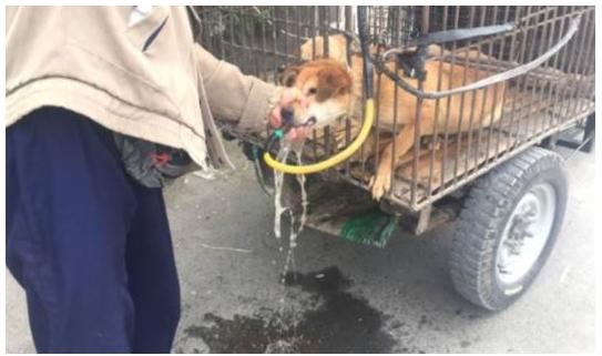 article 6 1 - 잔혹한 개장수에게 고통받는 강아지들