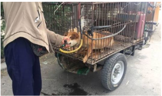 article 6 2 - 잔혹한 개장수에게 고통받는 강아지들