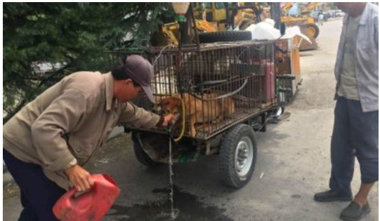article 6 4 - 잔혹한 개장수에게 고통받는 강아지들