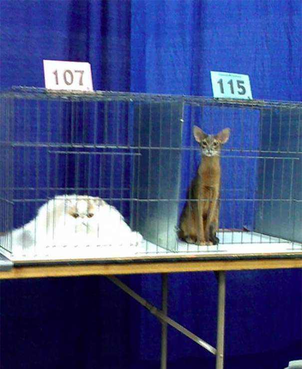 cats - 마치 녹아내리는 듯한 동물 사진 모음