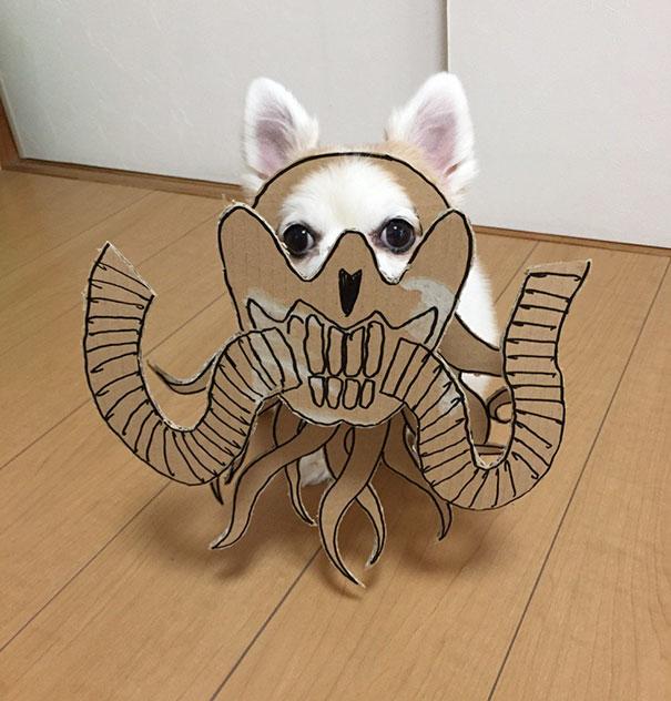 dog costume cardboard cutouts myouonnin 24 580f541d4c043  605 - 自分のチワワのペットと素晴らしいコスプレーをする女性