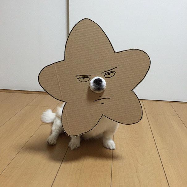dog costume cardboard cutouts myouonnin 33 580f543302db5  605 - 自分のチワワのペットと素晴らしいコスプレーをする女性
