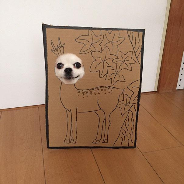dog costume cardboard cutouts myouonnin 39 580f5440526b9  605 - 自分のチワワのペットと素晴らしいコスプレーをする女性