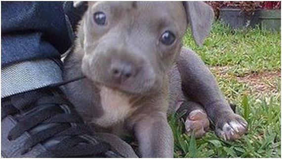 eab09c1 - 이 개는 아이의 절규를 들었다..그리고 잠시 후 '피범벅'