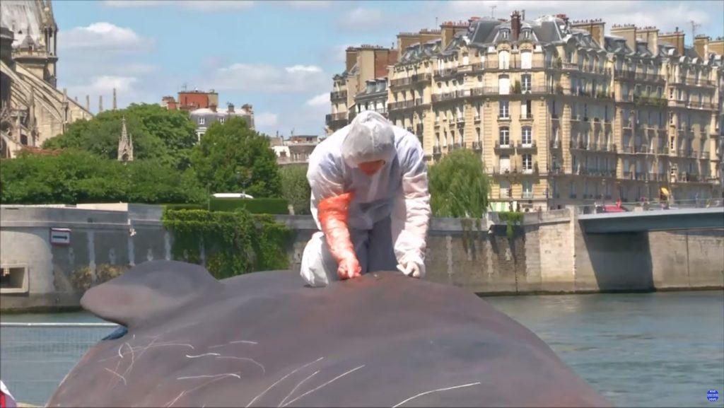 ec8aa4ed81aceba6b0ec83b74 1024x577 - 파리 센 강에 출몰한 17m 대형 고래의 정체!