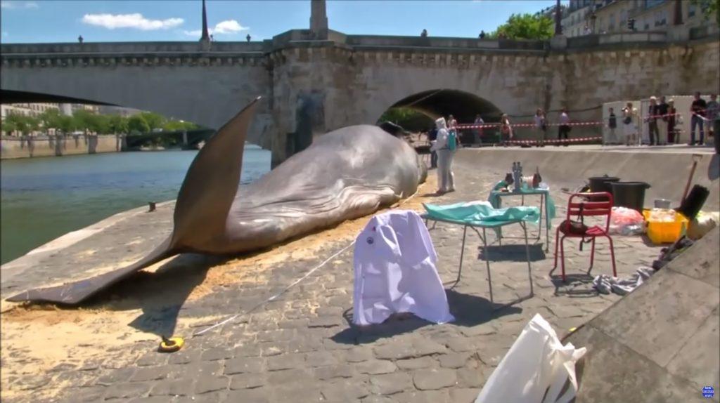 ec8aa4ed81aceba6b0ec83b77 1024x574 - 파리 센 강에 출몰한 17m 대형 고래의 정체!