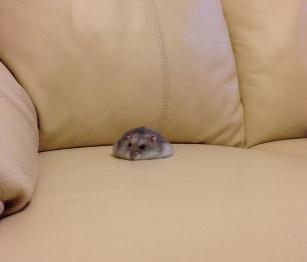 hamster2 - 마치 녹아내리는 듯한 동물 사진 모음