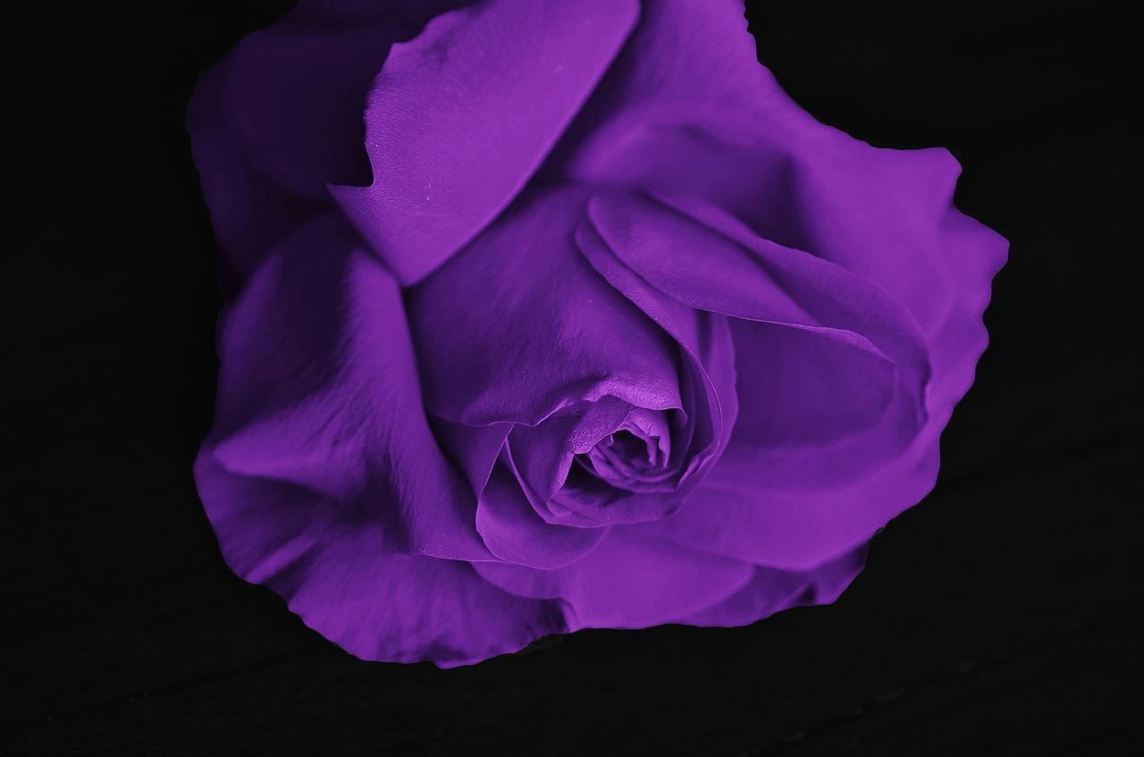 roses 292595 1280 - セックス大好きな女の子の特徴!?エッチな女の子の特徴9選まとめ