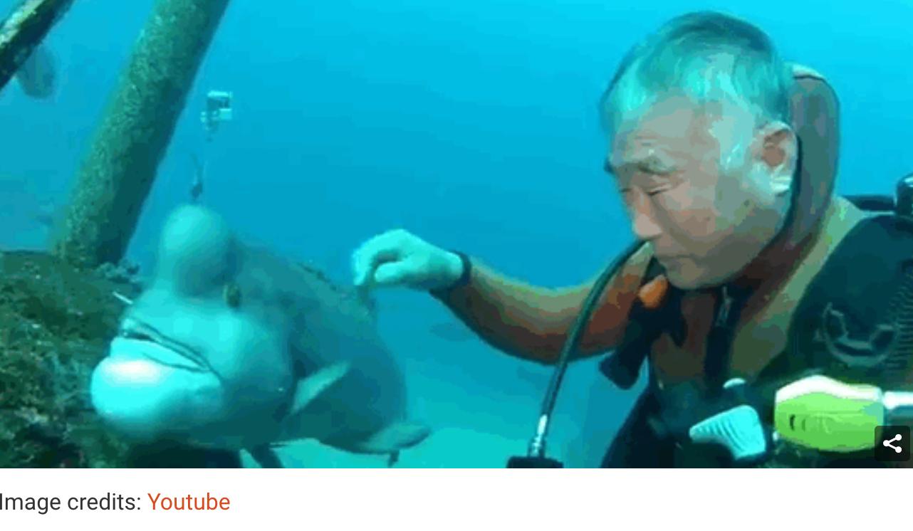 screen shot 2017 07 22 at 15 32 04 - 日本人ダイバーがコブダイと25年もの付き合いを?