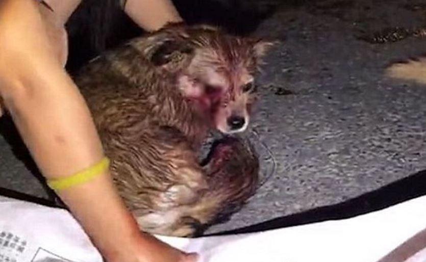 sfgdg - '도시 미관' 해친다는 이유로 눈 뽑혀 버려진 강아지들(사진 주의)