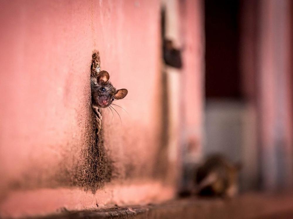 12495210 mouse hole home 91007 990x742 1000 5be6741b5b 1490359360 - 한번 보면 절대로 잊지 못할 '25장'의 사진