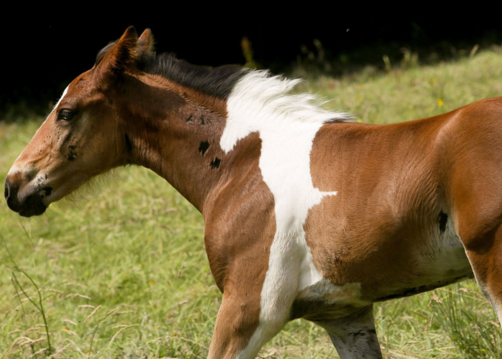 12495510 da vinci horse pattern north yorkshire raw 1000 dd19b39ed1 1490359360 - 한번 보면 절대로 잊지 못할 '25장'의 사진
