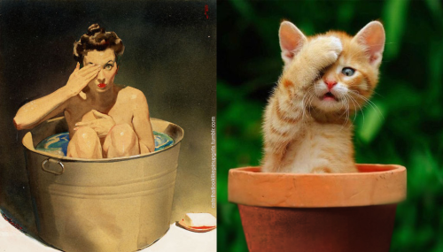 16 - 20+ Cats That Look Like Pinup Girls