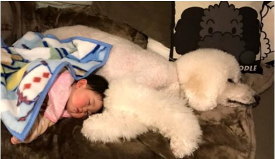 1708170203 - 우애 깊은 자이언트 푸들과 1살 아기의 사랑이 넘치는 일상 모습