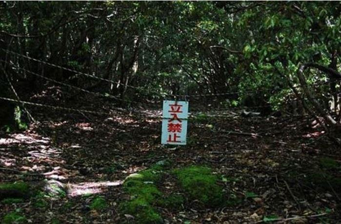 1708260701 - 한 번 들어가면 나올 수 없는 죽음의 숲 '주카이'... 일본의 '자살명소'