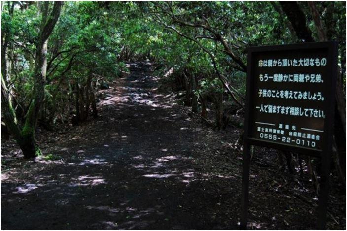 1708260704 - 한 번 들어가면 나올 수 없는 죽음의 숲 '주카이'... 일본의 '자살명소'