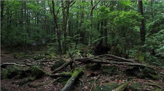 1708260705 - 한 번 들어가면 나올 수 없는 죽음의 숲 '주카이'... 일본의 '자살명소'