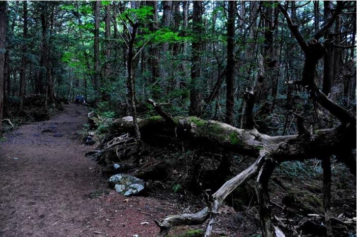 1708260706 - 한 번 들어가면 나올 수 없는 죽음의 숲 '주카이'... 일본의 '자살명소'
