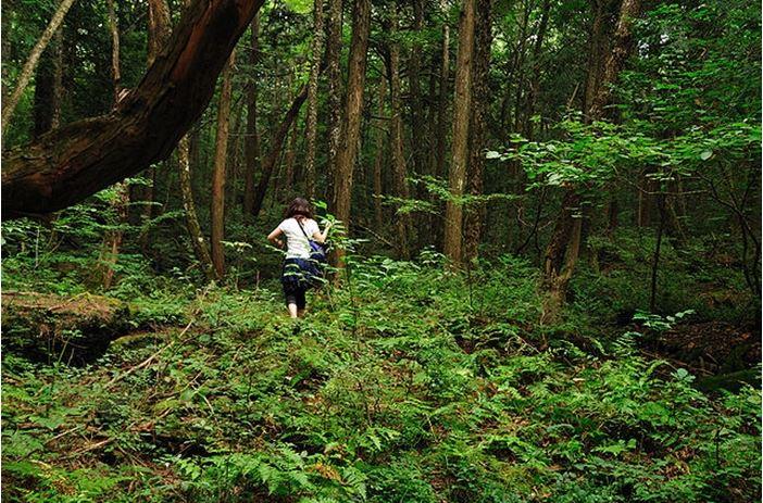 1708260709 - 한 번 들어가면 나올 수 없는 죽음의 숲 '주카이'... 일본의 '자살명소'