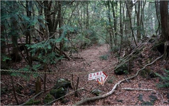 1708260721 - 한 번 들어가면 나올 수 없는 죽음의 숲 '주카이'... 일본의 '자살명소'