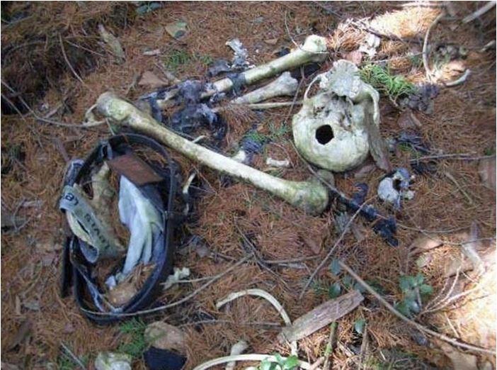 1708260722 - 한 번 들어가면 나올 수 없는 죽음의 숲 '주카이'... 일본의 '자살명소'