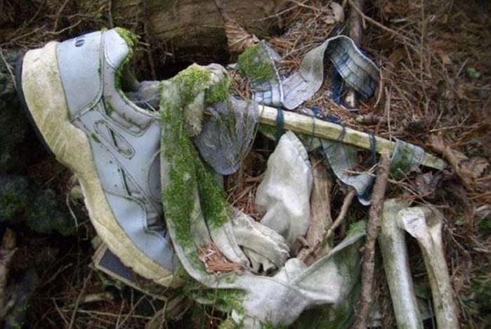1708260723 - 한 번 들어가면 나올 수 없는 죽음의 숲 '주카이'... 일본의 '자살명소'