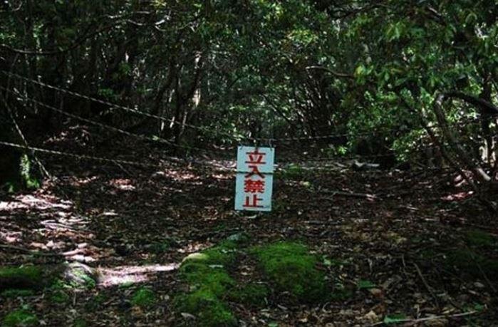 1708260724 - 한 번 들어가면 나올 수 없는 죽음의 숲 '주카이'... 일본의 '자살명소'
