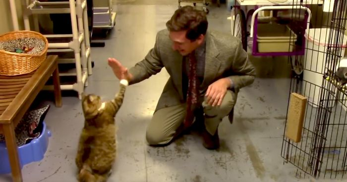 2 21 - They Tried To Sell Cats Like A Used Car, And The Internet Went Crazy For It! [Video]