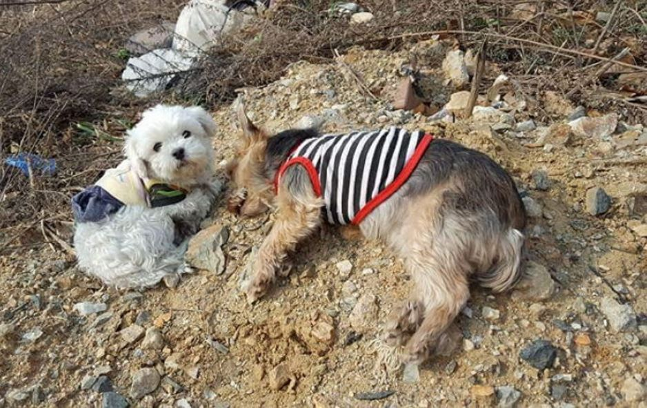 26 - '로드킬' 당한 친구를 벌벌 떨며 지키던 강아지의 사연