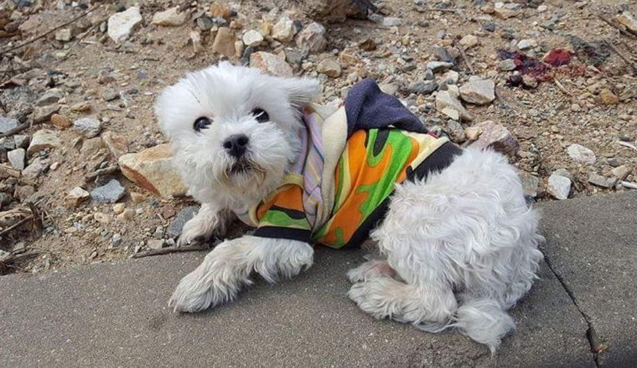 27 - '로드킬' 당한 친구를 벌벌 떨며 지키던 강아지의 사연