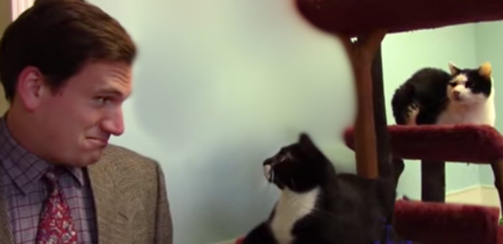 3 17 - They Tried To Sell Cats Like A Used Car, And The Internet Went Crazy For It! [Video]