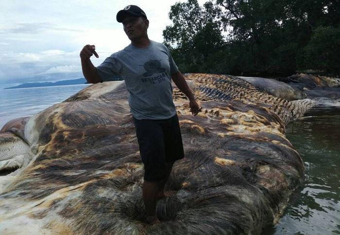 38u2muo59l6502r8h67y - 전 세계 충격에 빠뜨린 해안가로 떠밀려온 '15m 괴생명체'