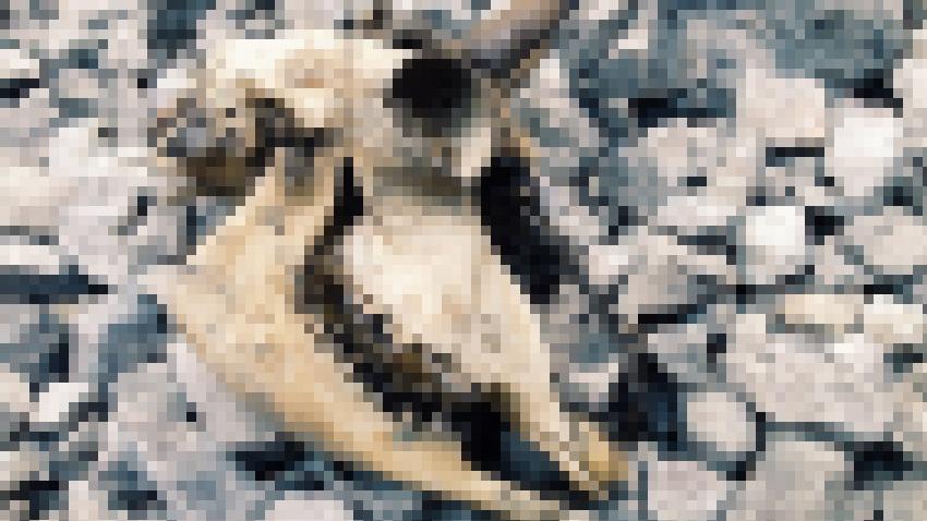 5 3 - 희대의 사이코패스 '연쇄살인마' 유영철의 소름돋는 11가지 일화