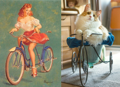 6 5 - 20+ Cats That Look Like Pinup Girls