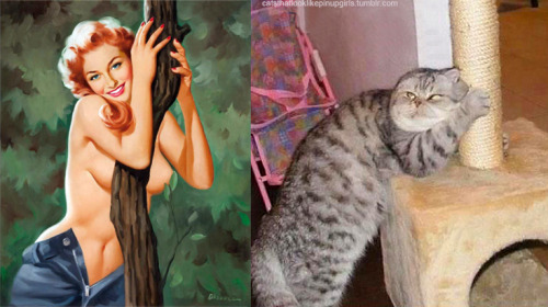 9 3 - 20+ Cats That Look Like Pinup Girls