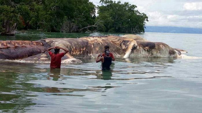 99n6x8jm1v8n455f816d - 전 세계 충격에 빠뜨린 해안가로 떠밀려온 '15m 괴생명체'