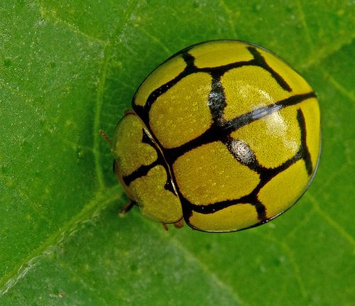 beetles - '차라리 몰랐으면 좋았을' 이상한 사실 13가지