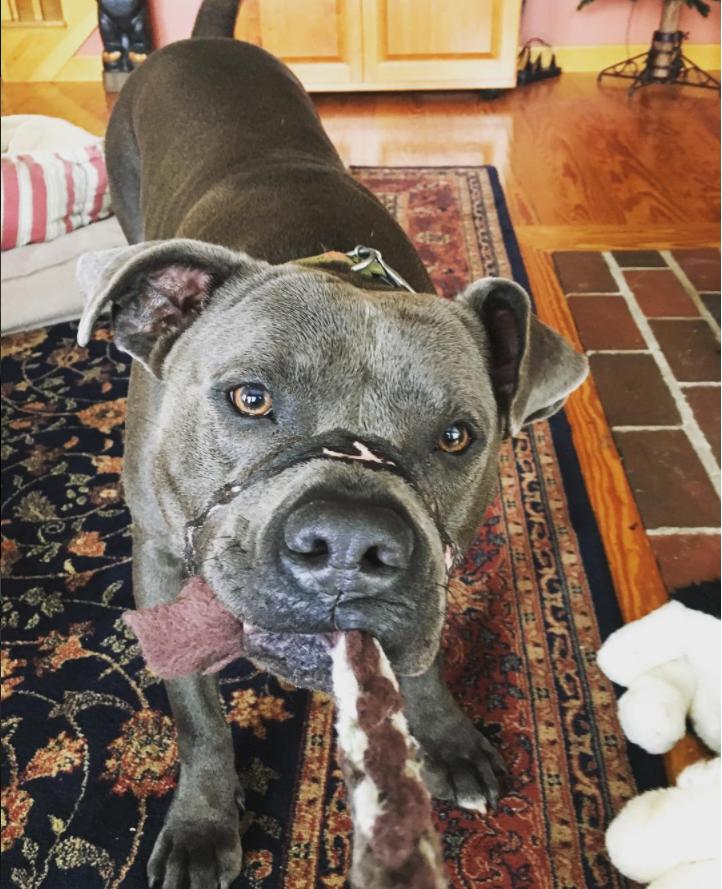 doggo 1 - [山に捨てられていた犬、口にはテープが貼られていた