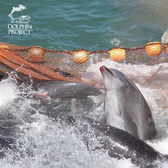 i - 피바다 만드는 일본 '돌고래 사냥'… 9월부터 본격 시작