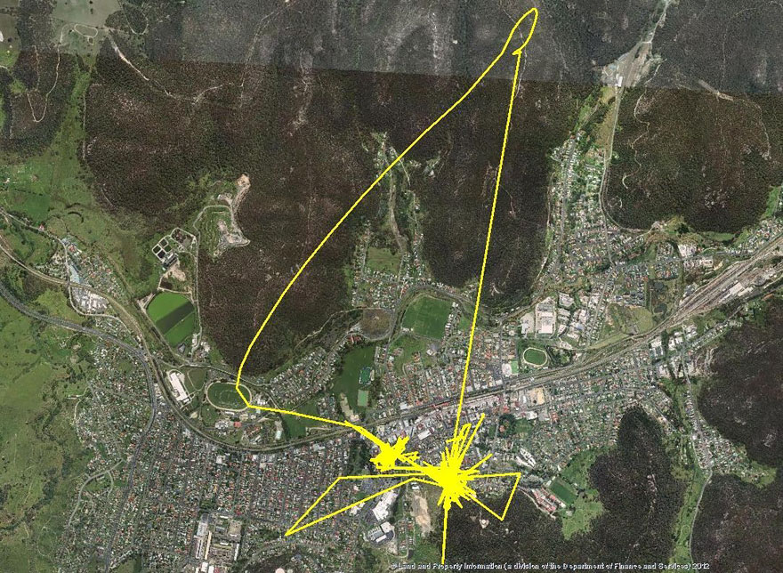 img 5995598f11316 - We Put GPS Trackers On Pet Cats. Cat Owners Have Never Imagined The Results