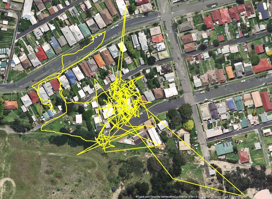 img 599559c26f9fd - We Put GPS Trackers On Pet Cats. Cat Owners Have Never Imagined The Results