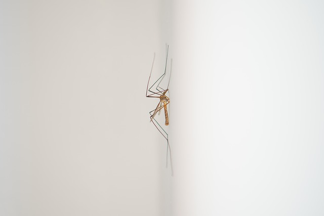 mosquito 2293824 640 - 100년 된 '이 연고'의 놀라운 활용법!