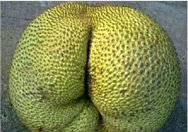 1709030102 - [후방주의!] 기분이 이상해질 만큼 야한 '19금' 과일과 야채 (사진 19장)