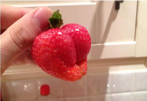 1709030108 - [후방주의!] 기분이 이상해질 만큼 야한 '19금' 과일과 야채 (사진 19장)